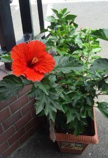 20140725flower.jpg